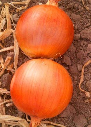 "Семена лука "" Дерек"" F1 1 кг. (Hazera)"