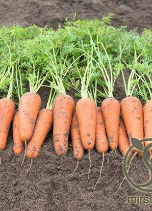 """Морковь """"Кесена"""" F1 (1,8-2,0 мм) 100 000 с. Бейо, (Bejo)"""