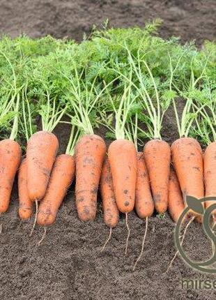 """Морковь """"Кесена"""" F1 (1,6-1,8 мм) 100 000 с. Бейо, (Bejo)"""