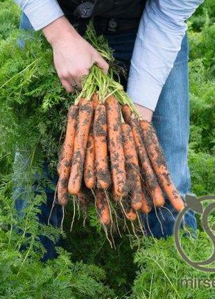 """Морковь """"Нерак"""" F1 (1,6-1,8 мм) 100 000 с. Бейо, (Bejo)"""