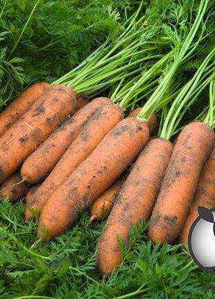 """Морковь """"Ньюкасл/ Newcastle"""" F1 (2-2,2 мм) 100 000 сем. Бейо (..."""