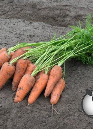 "Морковь ""Курасао/ Curacao"" F1 (1,4-1,6 мм) 100 000 сем. Бейо (..."