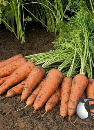 """Морковь """"Купар"""" F1 (1,4-1,6 мм) 100 000 сем. Бейо, (Bejo)"""