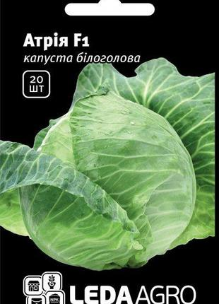 Семена капусты Атрия F1 20 сем. L ( Seminis)