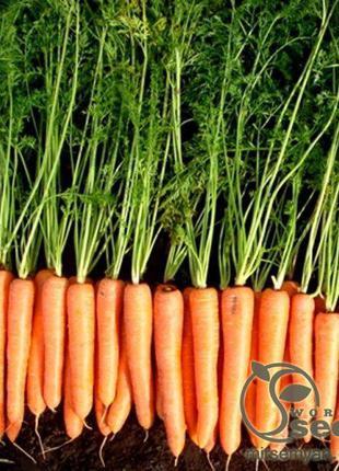 """Морковь """"Волкано"""" F1 100 000 сем. Хазера, (Hazera)"""