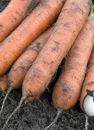 """Морковь """"Номинатор/ Nominator"""" F1 (2-2,2 мм) 100 000 сем. Бейо..."""