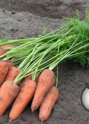 "Морковь ""Курасао/ Curacao"" F1 (2,2-2,4 мм) 100 000 сем. Бейо (..."