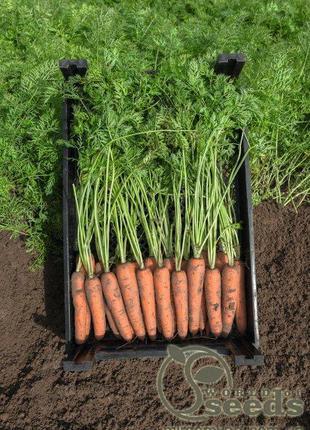 """Морковь """"Нарбонне"""" F1 (2,2-2,4 мм) 100 000 с. Бейо, (Bejo)"""