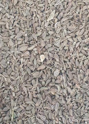 Анис обыкновенный (плоды/семена) 50 гр (Свежий урожай)
