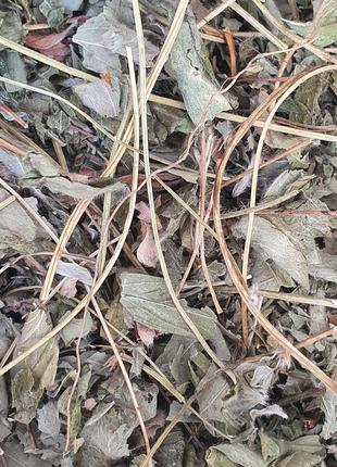 Лапчатка белая (трава) 50 гр (Свежий урожай)