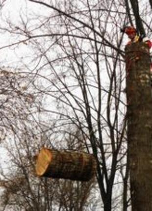 Аварийные,спил-вырезка-зрізання-зрізати-видалення деревья-дере...