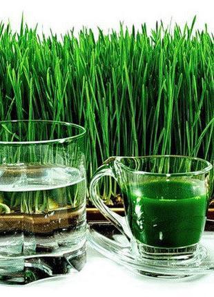 Витграсс сок с ростков пшеницы