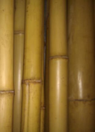 Бамбук 70-90мм.ЦЕНА ЗА ТРИ МЕТРА. Подставка. Полка.ЕсТь ПО резка