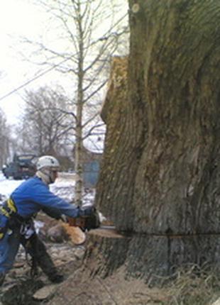 Обрезка деревьев в киеве