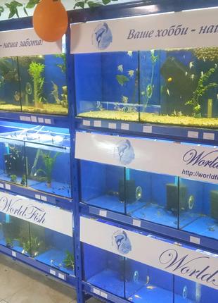 Аквариумные рыбки, креветки, растения, и многое другое в Харькове