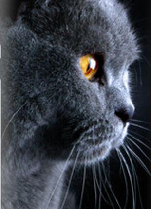 """Чехол на HTC One A9 Красивый кот """"3038u-156-2448"""""""