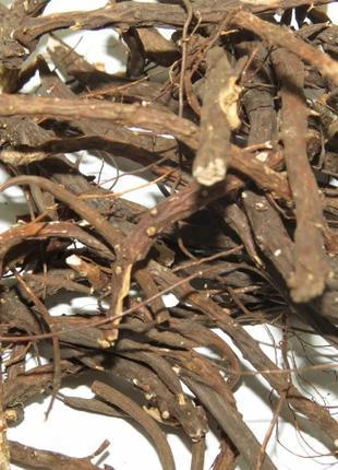 Лапчатка белая (корень) 50 гр (Свежий урожай)