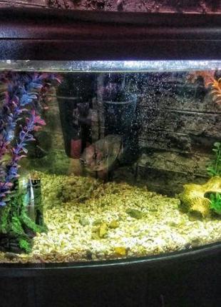 Аквариум, тумба, рыбка, фильтр,лампа, декор и всё прилагающееся