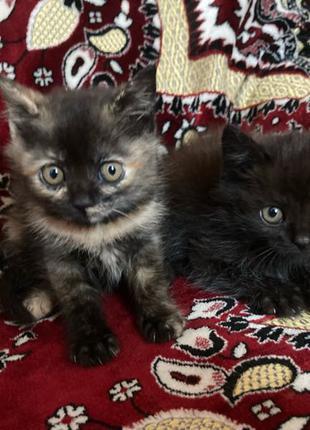 Активные и ласковые котята