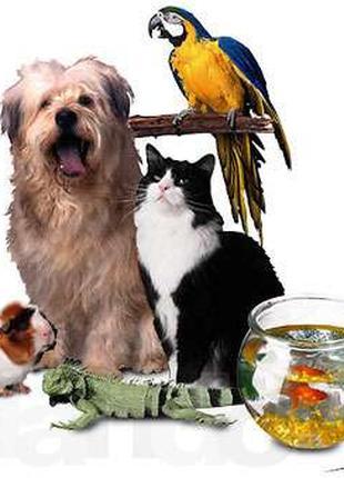 Ветеринар на дом (093)408-09-36