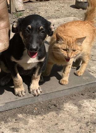 Шикарные щенки ищут семью!!! (БЕСПЛАТНО)