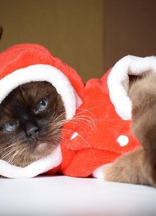 Наставьте рожки вашей кошке! Новогодний костюм для ревнивого кота