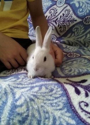 Декоративні кроликі