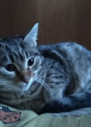 Подарю котёнка ,5 месяцев