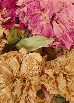 Пион цвет 50грамм (Свежий урожай)