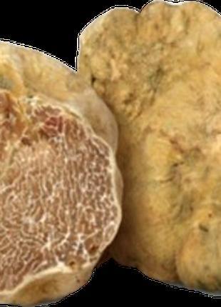 Белый трюфель, белые трюфели, белые трюфеля, трюфели грибы