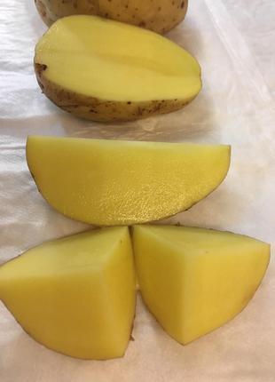 Картошка опт