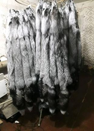 Выделанные шкуры серебристо-черной лисы (чернобурки)