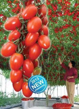 томаты древовидные
