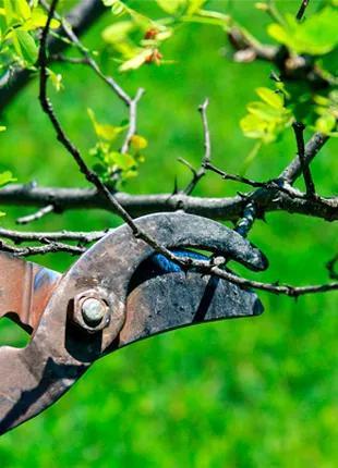 Спил деревьев , обрезка деревьев ,расчистка территорий в Полтаве