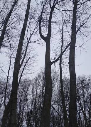 Обрезка, спил аварийных деревьев . Киев. Киевская обл