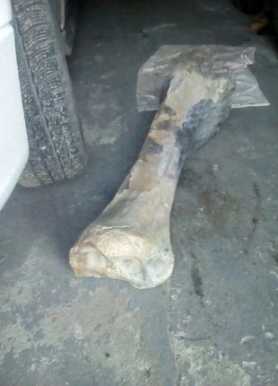 Кістка динозавра