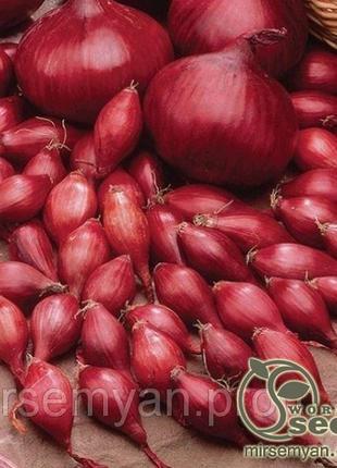 """Лук севок """"Ред Барон"""" 1кг. (TOP Onionsets Nederland)"""