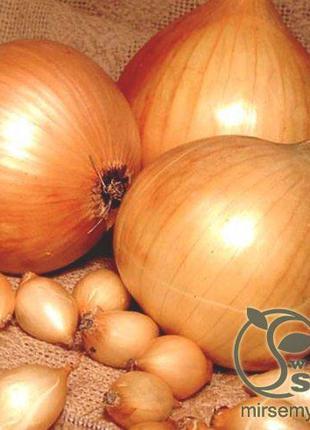 "Лук севок озимый ""Сеншуй Эллоу"" 1кг (TOP Onionsets Nederland)"