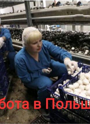 Работа в Польше, сбор грибов